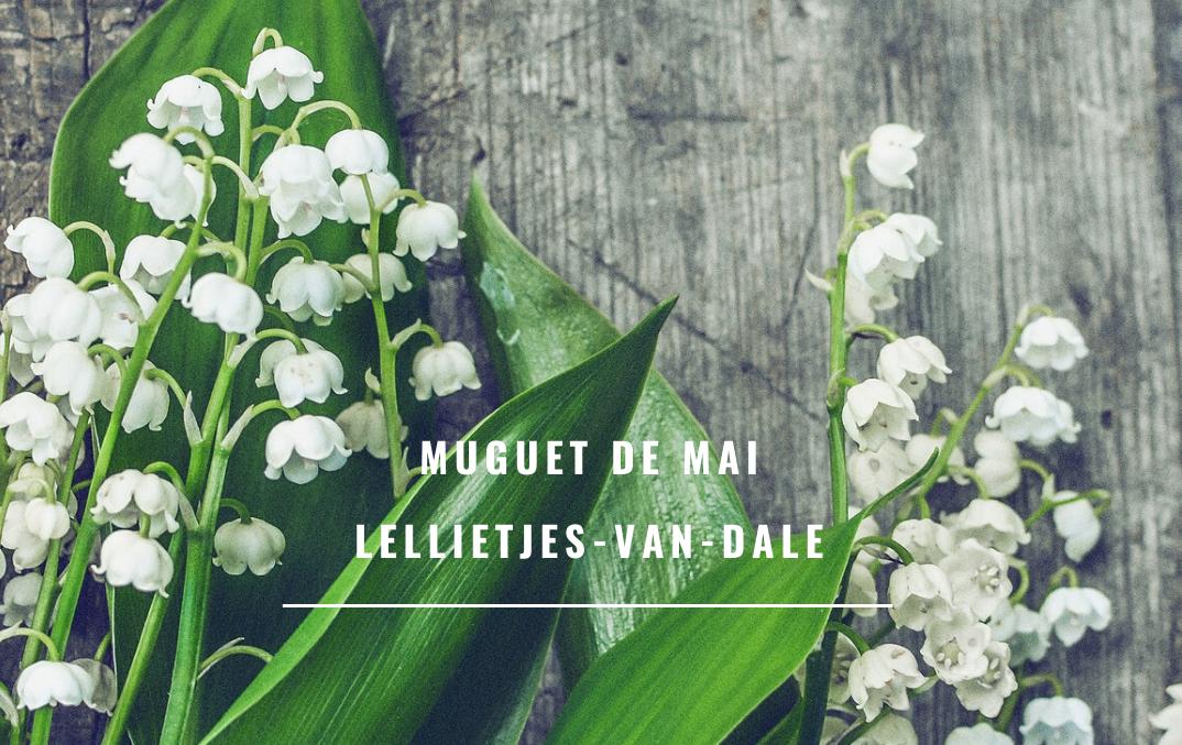 Muguet De Mai / Lellietjes-van-Dale